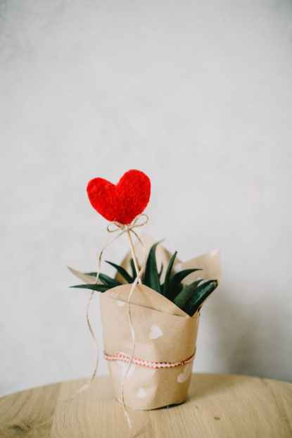 red heart ornament and aloe vera plant covered with paper